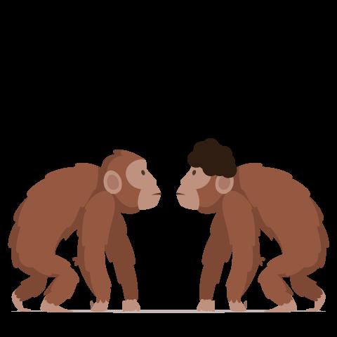 Sam & Joe apes